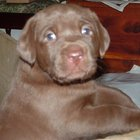 Collections of Puppy Pictures