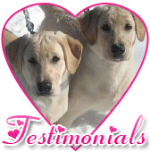 Testimonials - Reviews